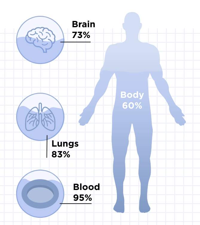 Body water repartition with lung, blood and brain water levels.
